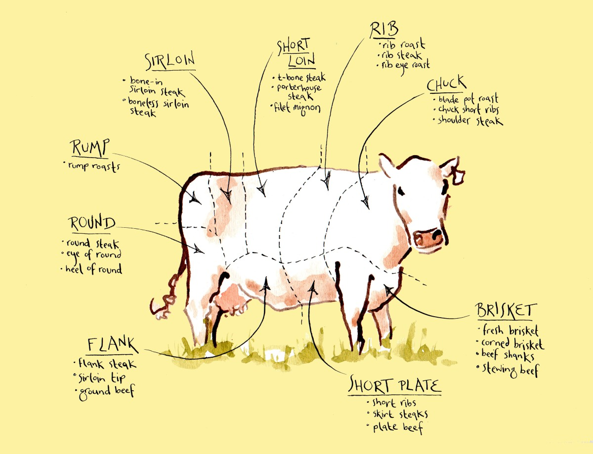 illustration demonstrating where various cuts of beef come from