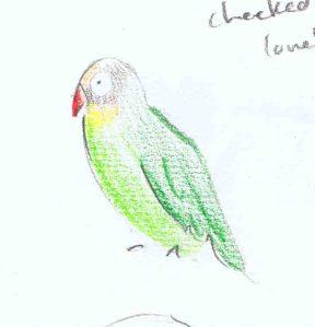 pencil sketch of black cheeked lovebird