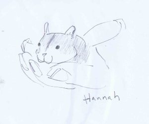 pencil drawing of hannah, my friend's hamster