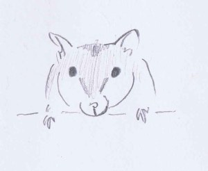 quick pencil sketch drawing of my friend's white siberian hamster