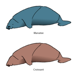 illustration of a manatee and croissant looking similar