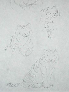 tiger pencil sketches for illustrated tissue box