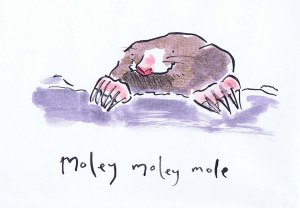 pen and ink mole drawing