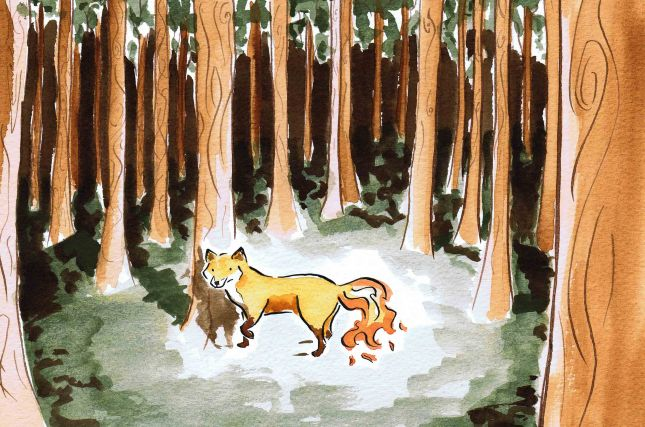 watercolour painting of a fox with a fire tail in a forest by Laura Elliott