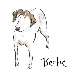Watercolour painting of a dog called Bertie by Laura Elliott at Drawesome Illustration, Bristol. Illustration, Design, Whimsy
