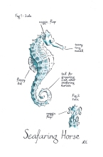 watercolour painting of a seahorse with silly anatomical notations by Laura Elliott at Drawesome Illustration, Bristol. Illustration, Design, Whimsy
