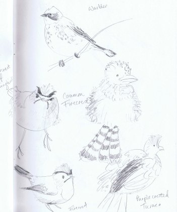 birds sketchbook 1