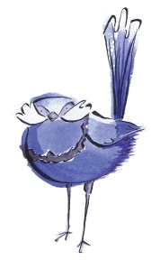 watercolour painging of a Splendid Fairy Wren by Laura Elliott at Drawesome Illustration, Bristol. Illustration, Design, Whimsy